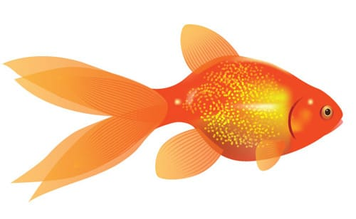 How to Create a Vector Goldfish in Six Steps