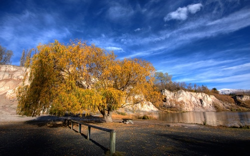 Saint Bathans, New Zealand. Golden Tree By Chris Gin