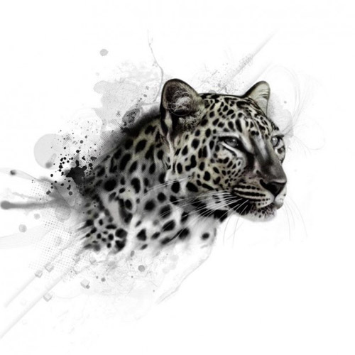 Snow Leopard - iPad Wallpaper