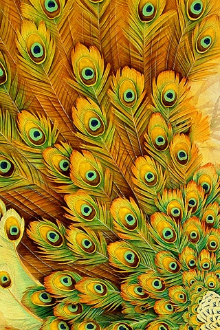 Peacock Feathers iPhone Wallpaper