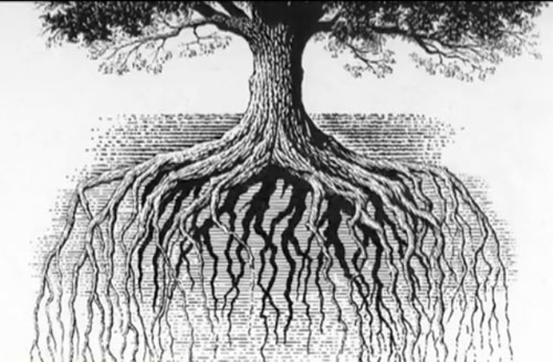 Scratchboard Illustration of an Oak Tree with Roots