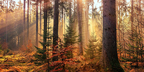 Beginner Landscape Editing with Matt Kloskowski